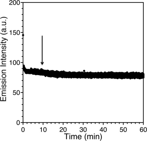 Kinetics of Zn(II) removal from 22 μM Zn(II)–WT1-4 by 100 μM EDTA buffered at pH 6.65 (20 mM MES,100 mM KCl) followed by the decrease in fluorescence emission intensityat 355 nm. The fluorescence emission intensity drops from an initialvalue of 145.67 au to 78.45 au in 15 min. Under similar conditions,Sénèque and Latour15 measuredan equilibration time for Zn(II)–CP1-CCHH of 1600 min.
