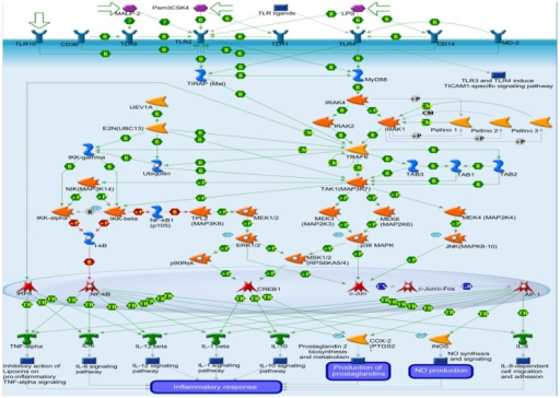 Signaling pathway map screened by Metadrug.