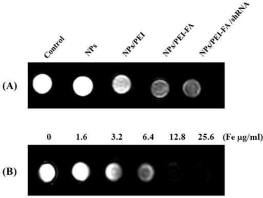 T2-weighted imaging of MDA-MB-231 cells.(A) MR images of phantoms containing MDA-MB-231 cells after 6 h incubation with Fe3O4@SiO2(FITC) (NPs), Fe3O4@SiO2(FITC)/PEI (NPs/PEI), Fe3O4@SiO2(FITC)/PEI-FA (NPs/PEI-FA) or Fe3O4@SiO2(FITC)/PEI-FA/Notch-1 shRNA (NPs/PEI-FA/shRNA) at a concentration of 25.6 μg/ml. (B) T2-weighted MR images of Fe3O4@SiO2(FITC)/PEI/Notch-1 shRNA nanocomplex aqueous solutions at different Fe concentrations. A saline solution without any nanoparticles was used as the control group.