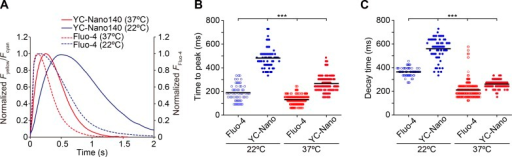 Comparison of a time course of CaT detected by α-actinin–YC-Nano140 with that by Fluo-4 in cardiomyocytes at different temperatures during spontaneous beating. (A) Time course of a change in Fyellow/Fcyan (α-actinin–YC-Nano140) or Fluo-4 fluorescence in cardiomyocytes at 22°C and 37°C. CaT was normalized at the peak for all curves. Each curve was averaged from five beats obtained in 8–24 cells (see B for experimental numbers). (B) Graph comparing the time to peak values for α-actinin–YC-Nano140 or Fluo-4 at 22°C and 37°C. n = 57 beats (8 cells), 61 beats (8 cells), 514 beats (24 cells), and 203 beats (14 cells) for Fluo-4 (22°C), α-actinin–YC-Nano140 (22°C), Fluo-4 (37°C), and α-actinin–YC-Nano140 (37°C), respectively. (C) Graph comparing the decay time values for α-actinin–YC-Nano140 and Fluo-4 at 22°C and 37°C. n, same as in B. (B and C) ***, P < 0.001 (Tukey-Kramer test). Bars in each graph indicate mean values.