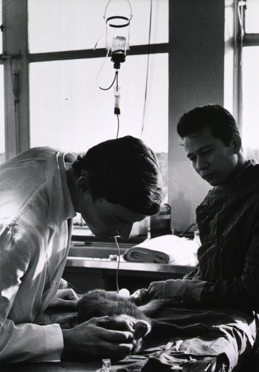 <p>Interior view: two researchers are examining a monkey on which they are conducting an experimental bone marrow transplant; such experiments contribute to the knowledge of immunological deficiency diseases in children.</p>