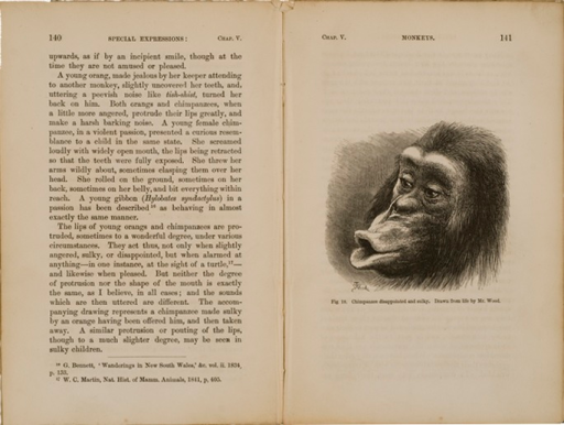 <p>Image of facing pages (p. 140-141) from The expression of the emotions in man and animals / by Charles Darwin. London : John Murray, 1872. Page 140 is text. Page 141 has illustration of chimpanzee disappointed and sulky. Drawn from life by Mr. Wood. Face of chimpanzee is shown with open mouth and lips protrouding.</p>