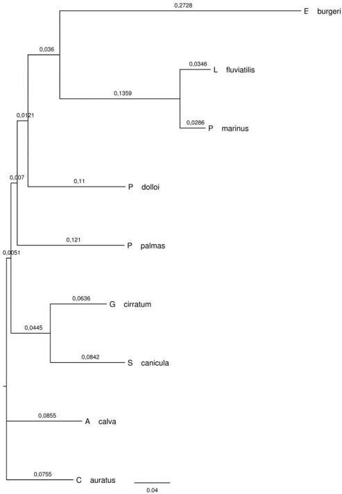 Phylogenetic relationships between species, as assessed by Neighborhood Joining of aligned cytochrome B sequences.Branch annotations refer to branch lengths.