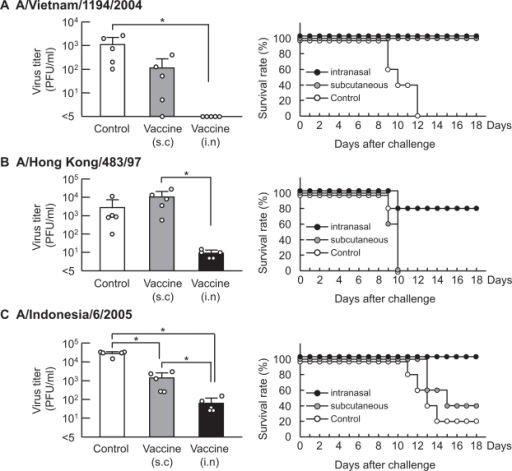 H5N1 virus titers in nasal washes and survival rates after lethal challenge with homologous A/Vietnam, heterologous A/Hong Kong, or heterologous A/Indonesia viruses. Mice were immunized intranasally (solid bar) or subcutaneously (gray bar) with vaccine and Ampligen®, then challenged by intranasal administration of 1000 PFU of A/Vietnam (A), A/Hong Kong (B), or A/Indonesia (C) virus 14 days after the final immunization. Nasal washes were collected three days post infection (d.p.i), and virus titers were measured by plaque assay. Each bar represents the mean ± SD of five mice and open circles indicate individual animals. For statistical analysis, virus titers were compared to those from control mice (open bar) that received intranasal administration of 10 μg of Ampligen® alone. Survival rates were monitored for 18 days. Copyright © 2007. Reproduced with permission from Ichinohe T, Kawaguchi A, Tamura S, et al. Intranasal immunization with H5N1 vaccine plus Poly I:Poly C12U, a Toll-like receptor agonist, protects mice against homologous and heterologous virus challenge. Microbes Infect. 2007; 9:1333–1340.Note: *p < 0.05.