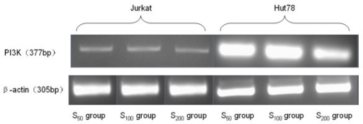 The expression of PI3K mRNA in Jurkat and Hut cells after CCL21 co-culture in vitro. RT-PCR amplication of the two cell lines under the different concentration of CCL21. The relative grey scale of PI3K mRNA in Hut cell was higher than that in Jurkat cell with corresponding concentration of CCL21. there were some difference on the grey scale in the group with different concentration of CCL21 of each cell lines. β-actin is positive control in RT-PCR amplication.