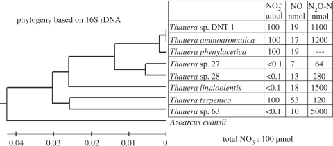 Relationship between phylogeny and the transient accumulation of NO2−, NO and N2O for different strains of Thauera; experimental conditions were similar to that used for P. denitrificans (figure 2). The phylogenetic tree was constructed using UPGMA method (for details see Liu et al. [40]), and the table shows the maximum amounts of the three intermediates transiently accumulated: NO2− (µmol flask−1), NO and N2O-N (nmol flask−1) during batch incubations of 50 ml culture (2 mM NO3−) in 120 ml reaction vessels. 100 µmol NO2− implies that all NO3− accumulated as NO2− during the first phase of denitrification. To convert nmol NO to nM in the liquid: 1 nmol flask−1 is equivalent to 0.7 nM in the liquid. Thauera Phenylacetica lacked nosZ, and converted all nitrate to N2O. Data assembled from Liu et al. [40].