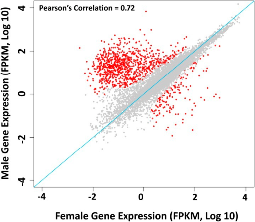 Sex-biased genes of D. suzukii. Correlations between whole female and whole male expression (FPKM, log10) are plotted (red, sex-biased genes; gray, nonbiased genes). Pearson correlation r = 0.72.