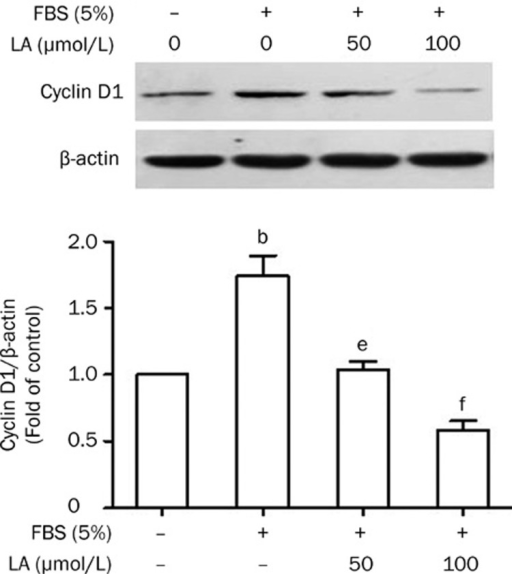Inhibitory effect of LA on FBS-stimulated cyclin D1 protein expression. Growth-arrested VSMCs were pretreated with LA (50 or 100 μmol/L) for 2 h and then stimulated with 5% FBS for 24 h. Expression of cyclin D1 protein was examined by Western blotting. β-actin was used as a loading control. Values are presented as mean±SEM. n=3. bP<0.05 vs control. eP<0.05, fP<0.01 vs FBS.