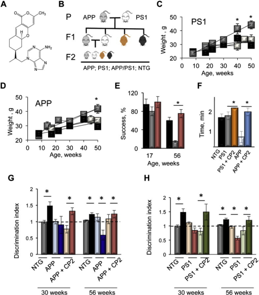 Chronic CP2 treatment averts the development of behavior and memory phenotype in FAD mice.(A) CP2 structure. (B) P and F1 animals treated with 25 mg/kg/day CP2 produced F1 progeny that were treated with CP2 till 14 months of age. F2 pups were used for axonal trafficking experiments. (C, D) CP2-treated PS1 (C, light gray; n = 5) and APP (D, light gray, n = 5) mice maintained body weight similar to NTG untreated mice (black, n = 10), while untreated PS1 (C, dark gray, n = 10) and APP (D, dark gray, n = 10) mice accumulated weight with age. *P < 0.05. (E) CP2-treated APP mice (red, n = 5) did not display muscle weakness or altered prehensile reflex in hanging bar test compared to untreated APP animals (gray, n = 10). Black — untreated NTG, n = 10. *P < 0.05. (F) Time on a rod rotating at 20 rpm. CP2-treated PS1 (orange, n = 5) and APP (dark blue, n = 5); untreated APP (light blue, n = 10), PS1 (gray, n = 10), and NTG mice (black, n = 10). Mice were 56 weeks old. *P < 0.05. (G, H) NOR test demonstrates that CP2-treated APP (G, light orange bars: training session; red bars: NOR, n = 5) and PS1 (H, light blue bars: training session; dark blue bars: NOR, n = 5) mice maintained the ability to recognize a familiar object similar to NTG animals (n = 10) while their untreated counterparts (n = 10 for APP and n = 10 for PS1) lost that ability with age. *P < 0.05. See also Figs. S1 and S2.