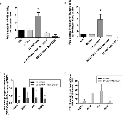 CD133 induced NF-κB activation promotes epithelial-mesenchymal transition and increases invasiveness(A) NF-κB activity correlated with CD133 expression and (B)In vitro invasion was decreased by NF-κB inhibition through IKK repression and pharmacological BAY 11–7085 treatment. (C) Decreased EMT genes upon IKBα repression in CD133hi-MIA cells and (D) induction of NF-κB activity through IKK enhancer plasmid in EV-MIA control increased EMT related genes and conversely.