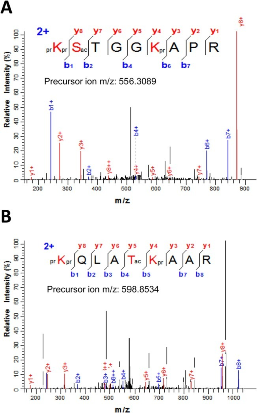 Serine/threonine O-acetylation in sugarcane histone H3.(A) MS/MS spectrum of the [M+2H]2+ ion (m/z 556.3089) that matched the histone H3 peptide prKSacTGGKprAPR (residues 9–17) where S10 is acetylated. (B) MS/MS spectra of the doubly-charged precursor ion at m/z 598.8534 corresponding to H3T22 acetylation in the H3 peptide prKQLATacKprAAR (residues 18–26). Sequence of the modified peptide and the measured mass of the precursor ion are shown in the figure inset. N-terminal and lysine propionylation, products of the chemical derivatization, are indicated by pr.