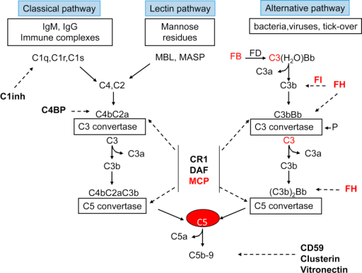 The 3 complement activation pathways. Bold text denotes complement-regulatory molecules; red text, proteins with genetic defects that have been associated with atypical hemolytic uremic syndrome (aHUS) and/or membranoproliferative glomerulopathy (MPGN)/C3 glomerulopathy (C3G). Abbreviations and definitions: C3(H2O)Bb, alternative pathway initiation convertase; C1inh, C1 inhibitor (inactivates C1r and C1s, MASP-1, and MASP-2); FB, complement factor B; FD, complement factor D; FH, complement factor H (binds C3b, exerts cofactor activity for FI-mediated C3b cleavage, prevents the formation of the alternative pathway C3 convertase, and destabilizes (decay accelerating activity) the alternative pathway C3 and C5 convertases); C4BP, C4b-binding protein (binds to C4b and has decay accelerating activity for the classical pathway C3 convertase and cofactor activity for FI-mediated C4b cleavage); CD59, protectin (with vitronectin and clusterin, prevents C5b-9 formation); CR1, complement receptor 1 (has decay accelerating activity as well as cofactor activity for FI-mediated C3b and C4b cleavage); DAF, decay accelerating factor (has decay accelerating activity on C3/C5 convertases of the classical and alternative pathways); FI, complement factor I (degrades C3b and C4b, aided by cofactors); Ig, immunoglobulin; MASP, MBL-associated serine proteases; MBL, mannose binding lectin; MCP, membrane cofactor protein (exerts cofactor activity for FI-mediated C3b cleavage); P, properdin.