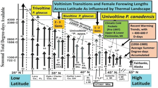 "An empirically-derived Model of the latitudinal trends in female forewing size and voltinism as a function of ""thermal time"" (Degree-day accumulations; mean from 1950–1989) from Florida at 27° N to Alaska at 65° N latitude (developmental base 50° F; =10° C). Actual observed size differences (see Table 1) of swallowtail butterfly female forewings (FW) are roughly indicated by the arrow lengths, and show a general cline of decreasing size with increasing latitude (Converse Bergmann's Rule). In the past decade, increases of roughly 700 D-days F (=400 D-days C; see Figure 3) are represented by the relaxation (upward shift indicated) of the constraints (dotted line) [l]. Selected sites along this 3,500 km latitudinal transect are depicted annually (Figure 1), show consistency of wing lengths during the past 4 decades (Figure 6) for P. glaucus (>2,500 females) and the northernmost P. canadensis (>1,000 females). Note the univoltine ""LF""hybrids and ""EF"" P. canadensis at 43° N latitude, and also the univoltine P. appalachiensis populations in Munroe Co. PA (40° N) and Pendleton Co. West Virginia (39° N) and Rabun & Habersham Cos. GA (36° N). These localized mountain populations have thermal constraints much greater than surrounding populations (as with the Michigan cold pockets, which realize considerably fewer thermal units locally than shown by the general 1950–1989 dotted line)."