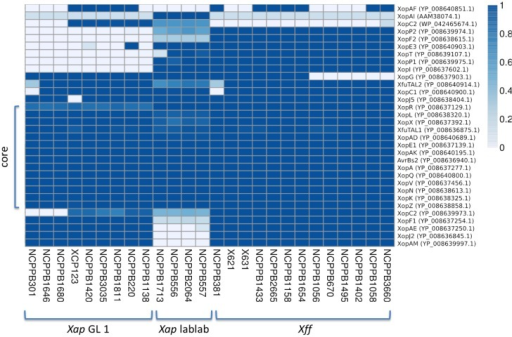 Repertoires of T3SS effectors. The heatmap indicates the proportion covered by aligned genomic sequence reads over each T3SS effector gene DNA sequence. GenBank accession numbers are given on the right side. Genomic sequence reads were aligned against the effector gene sequences using BWA-MEM. A coverage of 1.0 represents complete coverage, indicating that the gene is present in the respective genome. A coverage of 0.0 represents a complete absence of aligned sequence reads, indicating absence of the gene from the respective genome.