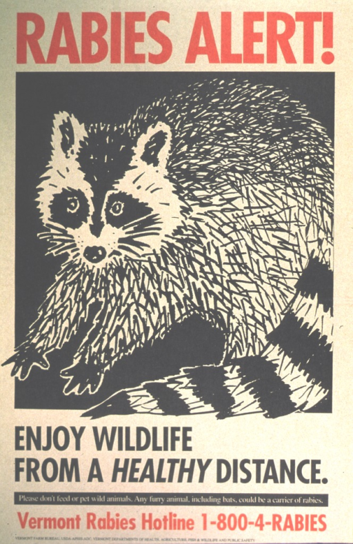 <p>Drawing of a raccoon.</p>
