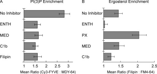 Interdependence of the vertex enrichment of regulatory lipids. Docking reactions were labeled with (A) 0.2 μM Cy3-FYVE or (B) 5 μM filipin and incubated with either 30 μM ENTH, 10 μM MED, 10 μM C1b, 19 μM filipin, 25 μM PX, or buffer alone. After 30 min at 27°C, reactions were placed on ice, labeled with MDY-64 (A) or FM4-64 (B), and prepared for fluorescence microscopy. Relative enrichments of specific probes were determined as in Fig. 3. Data are presented as geometric mean values ± 95% confidence intervals of the relative enrichment at vertices.
