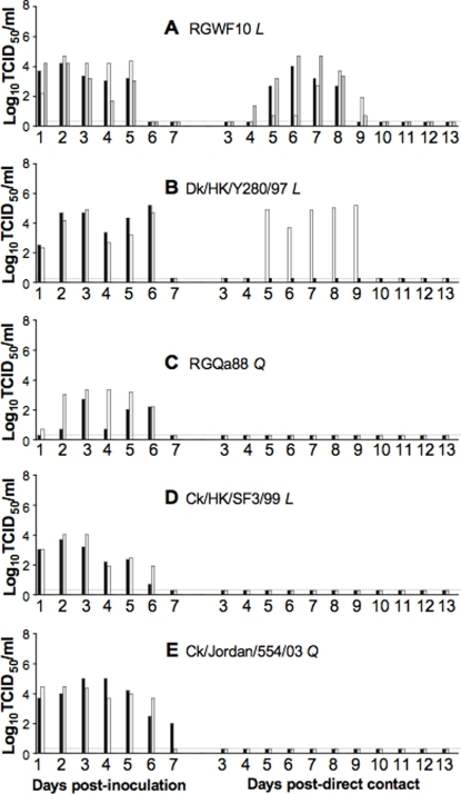 Replication and direct contact transmission of H9N2 viruses.Ferrets were inoculated intranasally (i.n.) with 106 TCID50 of H9N2 viruses RGWF10 (A), Dk/HK/Y280/97 (B), RGQa88 (C), Ck/HK/SF3/99 (D), and Ck/Jordan/554/03 (E). Twenty-four hours later, one naïve ferret (direct contact) was added to the same cage as each of the infected ferrets. Nasal washes were collected daily and were titrated in MDCK cells. Black, white and gray bars represent individual ferrets sampled and the amount of viral shedding at different days pi. The titers are expressed as log10 values of TCID50/ml with the limit of detection at 0.699 log10TCID50/ml. The dotted line was arbitrarily set at <0.3 log10TCID50/ml in order to represent samples below the detection limit. L and Q correspond to Leu226 and Gln226, respectively in the HA RBS.