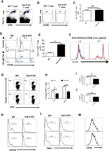 Galectin-9 deficiency extrinsically influences the virus-specific CD8+ T cell responses.Splenocytes (having 1×106 of CD8+ T cells) isolated from either WT or Gal-9 KO animals after labeling with CFSE were transferred in WT Thy1.1 animals (n = 4 for each recipient) (A-C). Alternatively, CFSE labeled splenocytes (having 1×106 of CD8+ T cells) isolated from Thy1.1 animals were transferred either in WT or in Gal-9 KO animals (D-E). The recipients were infected with 2.5×105 HSV in footpad after 24 hr pi. Five dpi spleens and PLN cell suspensions were analyzed for the dilution of CFSE in transferred Thy1.2+ or Thy1.1+CD8+ T cells. A. FACS plots show the frequencies of transferred Thy1.2+ WT or the Gal-9 KO cells in the PLNs of Thy1.1 animals 5 dpi B. The representative histograms showing the extent of CFSE dilution in the transferred WT or the Gal-9 KO cells (gated on Thy1.2+CD8+ T cells as shown in A). C. Absolute numbers of the transferred Thy1.2+ CD8+ T cells WT or the Gal-9 KO cells in the PLNs of recipients. D. The extent of CFSE dilution in the transferred Thy1.1+CD8+ T cells isolated 5dpi from WT and Gal-9 KO animals. E. FACS plots show the co-expression of Kb-gB-Tet and CFSE in the dividing transferred Thy1.1+CD8+ T cells isolated from WT and Gal-9 KO animals. F. Purified CD8+ T cells (90% purity) from WT and Gal-9 KO animals after CFSE labeling were stimulated with plate bound anti-CD3 and CD28 mAb for 3 days and the extent of proliferation was measured by CFSE dilution in CD8+ T cells. Red lines show the CFSE staining in Gal-9 KO, Black thick lines show the CFSE staining in WT cells and black thin lines represent CFSE staining in un-stimulated cells. G-L. The lymphoid organs of infected WT and Gal-9 KO animals at 6 dpi were isolated and Foxp3+CD4+ T cells were characterized. G. FACS plots show the frequencies of Foxp3+ Tregs in PLNs (upper panel) and spleens (lower panel) of WT and Gal-9 KO. The percentages (H), MFI of Foxp3 expression on Foxp3+CD4+ Tregs isolated from PLN (I) and spleens (J) of WT and Gal-9 KO animals are shown. K-L. The frequencies of CD103+ (K) and TIM-3+ (L) Foxp3+ Tregs isolated from the draining PLNs (upper panel) and Spleens (lower panel) of WT and Gal-9 KO animals are shown. M. The expression of CD44 on Foxp3+CD4+ T cells isolated from the PLNs (upper panel) and spleens (lower panel) of WT (thin lines) and Gal-9 KO (thicker lines) animals.