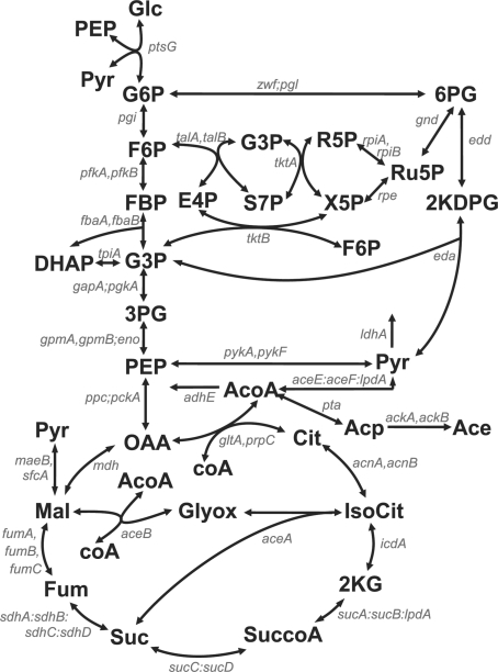 Scheme of E.coli central carbon metabolism. This map, showing metabolites (bold fonts) and genes (italic) is adapted from (Ishii et al., 2007). Abbreviations of metabolites are glucose (Glc), glucose 6-phosphate (G6P), fructose 6-phosphate (F6P), fructose 1-6-biphosphate (FBP), dihydroxyacetone phosphate (DHAP), glyceraldehyde 3-phosphate (G3P), 3-phosphoglycerate (3PG), phosphoenolpyruvate (PEP), pyruvate (Pyr), 6-phosphogluconate (6PG), 2-keto-3-deoxy-6-phospho-gluconate (2KDPG), ribulose 5-phosphate (Ru5P), ribose 5-phosphate (R5P), xylulose 5-phosphate (X5P), sedoheptulose 7-phosphate (S7P), erythrose 4-phosphate (E4P), oxaloacetate (OAA), citrate (Cit), isocitrate (IsoCit), 2-keto-glutarate (2KG), succinate-CoA (SuccoA), succinate (Suc), fumarate (Fum), malate (Mal), glyoxylate (Glyox), acetyl-CoA (AcoA), acetylphosphate (Acp) and acetate (Ace). Cofactors impacting the reactions are not shown. The gene names are separated by a comma in the case of isoenzymes, by a colon for enzyme complexes, and by a semicolon when the enzymes catalyze reactions that have been lumped together in the model.