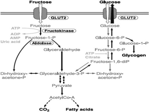 Metabolism of fructose and glucose in the liver. Although there are differences in metabolism, the pathways are interactive, as indicated in the figure. Reproduced from (22) with permission. ADP, adenosine diphosphate; AMP, adenosine monophosphate; ATP, adenosine-5'-triphosphate; CO2, carbon dioxide; GLUT, glucose transporters.