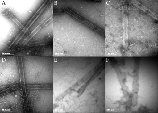 TEM micrographs of VP6U subjected to assembly conditions after exposure for 1 h to MCO. A) Nanotubes obtained after assembly of untreated VP6U. Other panels, MCO with B) 100 µM C) 250 µM. D) 500 µM. E) 1,000 µM. F) 5,000 µM of H2O2. Samples were stained with 2% uranyl acetate and observed at a magnification of 85,000X.