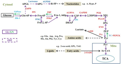 Schematic Diagram Showing The Carbohydrate Metabolic Pa Open I