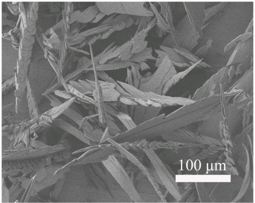 FESEM image of the sample grown for 2 h in the presence of aspartic acid.