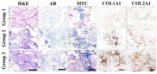 Histological and immunohistochemical analyses. Scaffolds were retrieved on day 21 and subject to histological and immunochemical analyses. H&E, Alcian Blue, and Masson trichrome stains were imaged at 10×, and COL1A1 and COL2A1 were imaged at 4× magnification.