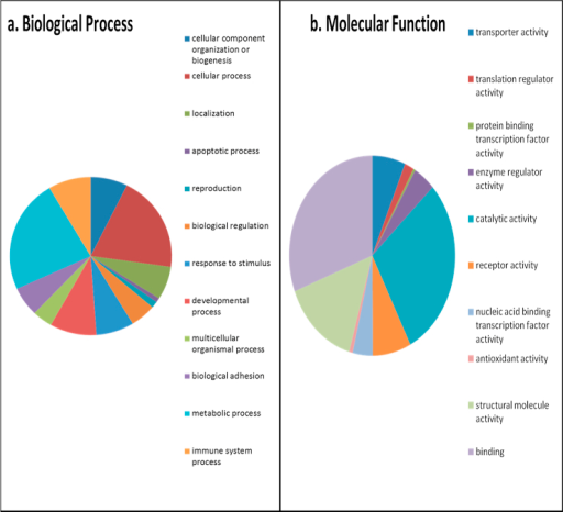 GO of SF using Panther. All proteins identified in SF were input into Panther protein classification software in order to determine the GO terms for (a) biological processes and (b) molecular function. Pie charts are representative of the percentage of proteins within each classification.