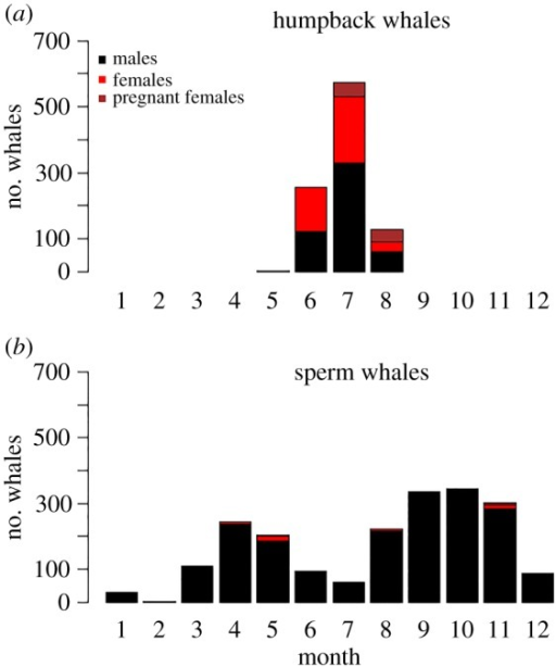 Number of (a) humpback whales and (b) sperm whales of each reproductive class (males, females and pregnant females) processed at Cheynes Beach Whaling Station each month during the years 1952–1963.