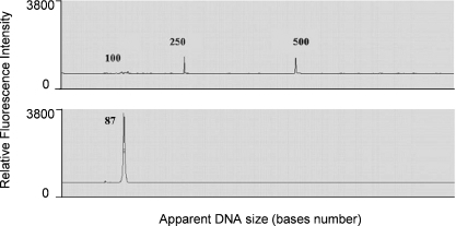 Surface DNA content analysis by TdT labeling of 3′-OH using Cy5-ddNTP Visual Genetics sequencer trace recorded for disulfide-T2 template (80mer) grafted on BTA glass, labeled with 500 nM ddNTP-Cy5.0 at 3′ end (TdT) and cleaved from the surface in 50 mM DTT/Tris solution pH 8.5 (1 h). Grafting conditions: 130 nM 5′-amino-SS-T2 template, 10 mM EDC/10 mM 1-Methyl-Imidazole (50°C)/1 h. Terminal Deoxynucleotidyl Transferase (TdT), 20 µ/ml, NEB buffer4, CoCl2 (250 mM). Sequencer (Visible Genetics, VG90008), SureFill 6% Sequencing Gel (Visible Genetics, Ref. #VG40006), Stop Loading Dye (Amersham). The upper traces represent DNA size markers labeled with Cy5.5. In the lower trace, the Cy5 labelled oligonucleotide extracted from the surface migrates as a single peak with an approximate apparent size of 87 bases.