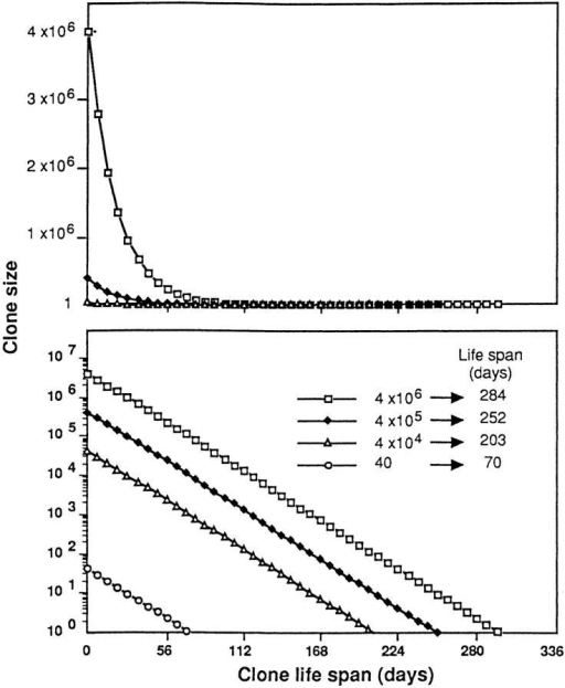 Exponential decay of four T cell clones of different sizes, calculated according to the formula X(t) = X0 (1 − a)t. The clone size (y-axis) is shown on a linear scale (top) or a log scale (bottom). The life span of  each clone (the number of days required for all members of the clone to  disappear) was calculated as the time required for each decay curve to intercept the x-axis, i.e., to fall below one cell.
