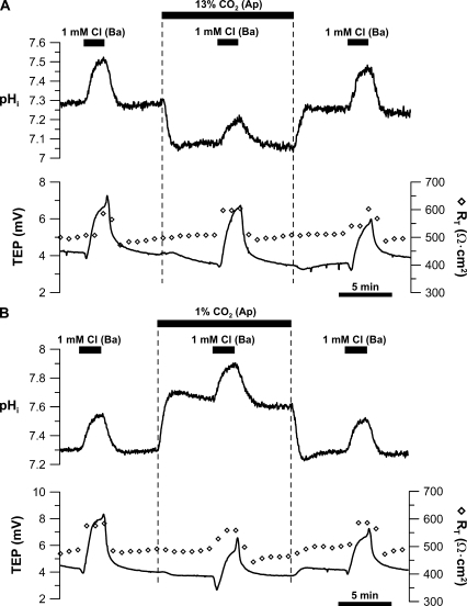 pH sensitivity of basolateral membrane Cl/HCO3 exchanger. Low (1 mM) Cl Ringer was perfused into the apical bath to record the initial control response. This maneuver was then repeated in (A) 13% or (B) 1% apical bath CO2. After returning to control Ringer, low basal bath [Cl]-induced control response was obtained. Solid bars above the graphs represent solution changes from control Ringer as described in the legend to Fig. 2.