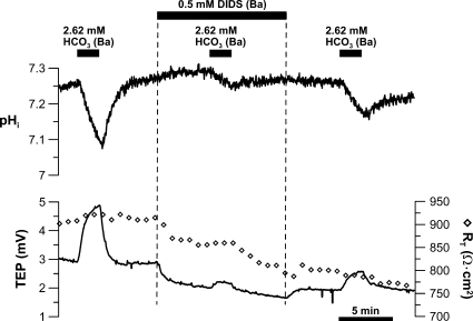 DIDS sensitivity of basolateral membrane Na/nHCO3 cotransporter. Low HCO3 (2.62 mM) Ringer was perfused into the basal bath to record the pHi, TEP, and RT responses, first in the absence and then in the presence of 0.5 mM of basal DIDS. After DIDS washout, low basal bath [HCO3]-induced control response was obtained. Solid bars above the graphs represent solution changes from control Ringer as described in the legend to Fig. 2.