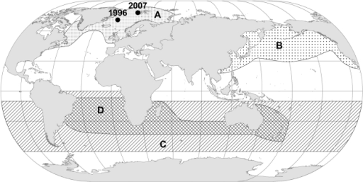 Global distribution of minke whales during northern hemisphere summer feeding season.A: Balaenoptera a. acutorostrata, B: B. a. scammoni, C: B. bonaerensis, D: B. a. unnamed subspecies (dwarf minke).1996 and 2007 refers to locations of capture for two atypical whales.