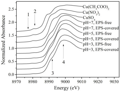 X-ray absorption near-edge structure of reference compounds and Cu- activated sludge under different conditions.