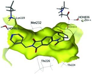 Targeting structural water molecules by introducing a 4‐pyridylmethylene fragment to the phthalimide inhibitor scaffold; compound 6 shows additional water‐mediated binding to Lys 119 by HOH822.