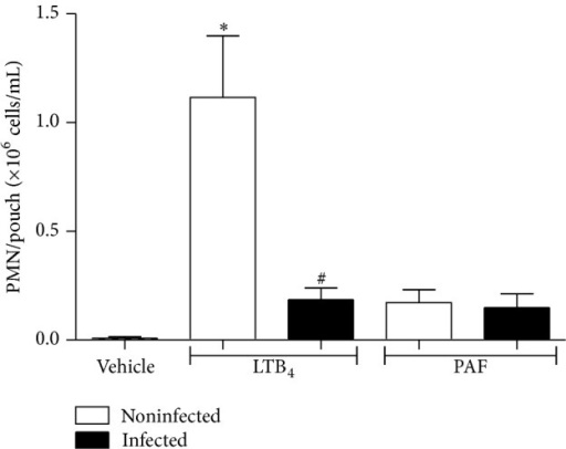 PMN recruitment to air pouch induced by PAF is dependent on endogenous leukotrienes. 5-LO−/− mice were inoculated with PBS or infected with Hc (i.t., 3 × 106 yeast). After 2 days, LTB4 (0.1 μg), PAF (1 μg), or PBS (1 mL) were injected into air pouch, and, 4 h after, PMN were recovered and the counts were determined as described in Materials and Methods. Data are the mean ± SEM of n = 4-5. *P < 0.05 versus vehicle (noninfected mice); #P < 0.05 versus noninfected (LTB4 into air pouch).