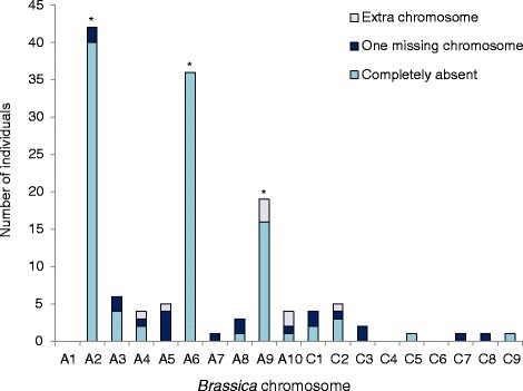 "Relative chromosome copy number variation within each individual in a microspore-derived population resulting from a trigenomic Brassica hybrid. Asterisks indicate chromosomes with only one copy in the parent hybrid. One missing chromosome was only assessed in somatically-doubled ""2n"" progeny, and extra chromosome refers to either two copies in an ""n"" progeny, or three or four copies in a ""2n"" progeny"