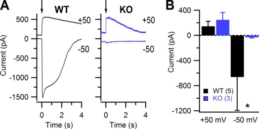 Transduction current elicited by 8-Br-cAMP photorelease recorded in isolated olfactory neurons. (A) Representative whole cell response to photorelease of 8-Br-cAMP at a holding potential of −50 mV and 50 mV for WT and KO OSNs. The arrows indicate the time of application of UV light flashes. (B) Summary of the mean maximal current ± SD. n = 5 from 4 WT mice; n = 3 from 2 KO mice; Mann-Whitney U test: *, P < 0.05.
