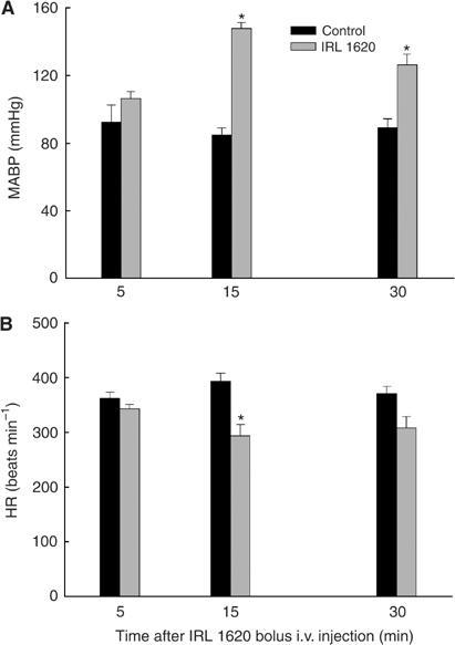 Changes in mean arterial blood pressure (A) and HR (B) of P22 tumour-bearing control-untreated and IRL-treated rats. Each bar represents arithmetic mean±s.e. for three to six animals. A significant difference from control is represented by (*).