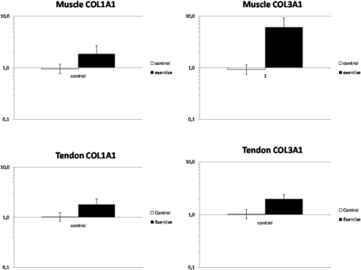 Gene expression of COL1A1 and COL3A1.COL1A1 and CoL3A1 mRNA normalized to tissue weight, presented as fold changes in the exercise group (filled bars) relative to the mean of the control group (open bars) in Achilles tendon and soleus muscle. In tendon COL3A1 mRNA was significantly increased (p<0.05) in the Exercise group and COL1A1 mRNA showed a strong tendency to an increase (p = 0.09). In exercised soleus muscle both COL1A1 (p<0.01) and COL3A1 (p<0.001) were significantly increased. Values are geometric means ± SEM.