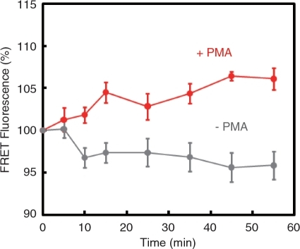 Real time monitoring of endogenous c-fos mRNA induction. Normalized FRET fluorescence from streptavidin-bound linear antisense 2′OMeRNA probes was recorded over time. Red line indicates the result from PMA-treated COS7 cells and gray line indicates the result from COS7 cells treated with diluents (0.0001% DMSO). The probe concentration inside the cell was 12 ± 4.8 µM (five cells). Error bars represent SD.