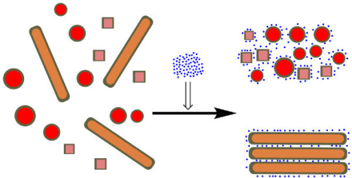 A schematic illustration for ions-assisted selective separation of gold NRs. The blue dots represent anions and other cartoons correspond to the positively charged bilayer of surfactants stabilized gold nanoparticles with different shapes
