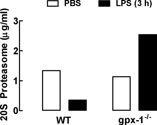 Effect of LPS on 20S proteasome concentrations in BALF of WT and gpx-1−/− mice.WT and gpx-1−/− mice were treated with LPS (10 µg/mouse) for 3 h and 20S proteasome concentrations measured in BALF. Data are shown as the mean for BALF pooled from 5–6 individual mice per treatment group. Clear bars represent PBS-treated mice and black bars represent LPS-treated mice.