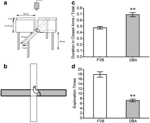 DBA/2 mice show higher anxiety compared to FVB/N mice. An elevated plus-maze was used to evaluate anxiety-like behavior in the strains of DBA/2 and FVB/N mice. A) The diagram shows the experimental methods to examine a mouse staying in the open arms vs. closed ones in an elevated plus-maze. B) shows the mouse position for counting exploration times. C) illustrates the duration for mice staying in the closed arms vs. total duration for each experiment in DBA/2 mice (gray bar) and FVB/N mice (white; p < 0.01, n = 12). D) shows exploration times towards the open arms for DBA/2 mice (gray bar) vs. FVB/N ones (white; p < 0.01, n = 12). The duration for staying in the closed arms is longer and the exploration times are lower significantly in DBA/2 mice than FVB/N mice.