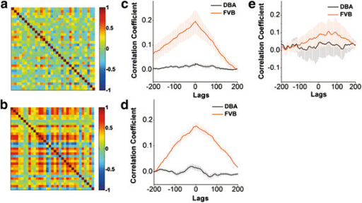 The activities of amygdala neurons are less synchronous in DBA/2 mice than in FVB/N mice. Two-photon cellular imaging was conducted under the frame scanning. A) The picture of chip patterns shows the cross-correlations in the timing phase of activity between two neighboring neurons in DBA/2 mice. Colors from red to blue indicate their cross-correlations from high (synchronous activity) to low. B) shows the cross-correlations between neighboring neurons in FVB/N mice. C) shows a comparison in the cross-correlations averaged from all of the visible amygdala neurons in a FVB/N mouse (red line) and in a DBA/2 mouse (black), in which experiments were done in a single day (p < 0.01). D) illustrates a comparison in the cross-correlations averaged from all of FVB/N mice (red line; n = 11) and DBA/2 ones (black; p < 0.01, n = 12). E) shows a comparison in cross-correlations averaged from all of the astrocytes in FVB/N mice (red line) and DBA/2 ones (black; p = 0.56).