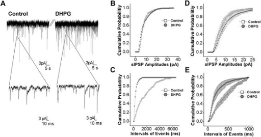3,5-DHPG enhances GABAergic synaptic transmission in the amygdala neurons of DBA mice. Spontaneous GABAergic inhibitory postsynaptic currents (IPSC) were recorded by whole-cell clamp at amygdala neurons in brain slices before and after DHPG (10 μM) was washed onto the slices. A) shows GABAergic sIPSCs under the conditions of control (left panels) and DHPG application (right panels). Bottom panels show sIPSCs in the extended time scales. B) shows cumulative probability vs. sIPSCs amplitudes before (opened symbols) and after using DHPG (filled ones) from an experiment in panel A. C) shows the cumulative probability vs. inter-event intervals for sIPSCs before (opened symbols) and after applying DHPG (filled ones) from an experiment in panel A. D) shows the cumulative probability vs. sIPSCs amplitudes before (opened symbols) and after applying DHPG (filled ones) averaged from all of the experiments (n = 8). E) shows the cumulative probability vs. inter-event intervals for sIPSCs before (opened symbols) and after using DHPG (filled ones) from all of the experiments (n = 8, p < 0.01).