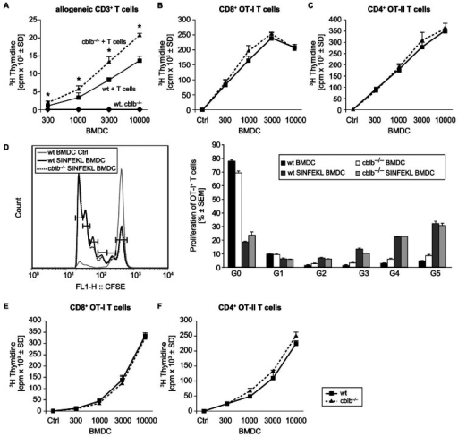 Cblb−/− BMDCs show increased allogeneic T cell proliferation but are not more effective in the induction of antigen-specific T cell responses and cross-presentation.(A) Increased allogeneic T cell proliferation induced by cblb−/− BMDCs. LPS matured wildtype or cblb−/− BMDCs were added in increasing numbers to 2×105 allogeneic T cells for two days. Incorporation of 3H-Thymidine radioactivity during the last 16–18 hours of culture was measured. Data represent counts per minute (mean value ± SD, n = 4), representative of 4 independent experiments is shown, *p<0.05 wildtype BMDC versus cblb−/− BMDCs (Student t-test). (B/C) No difference in antigen specific T cell proliferation between wildtype and cblb−/− BMDCs. Wildtype and cblb−/− BMDCs were matured with 100 ng/ml LPS and primed with (B) 10 µM SIINFEKL-peptide (OT-I) or (C) 10 µM ISQAVHAAHAEINEAGR–peptide (OT-II) on day seven of culture overnight. Graded doses of BMDCs were then co-cultured with 2×105 antigen-specific CD8+ (OT-I) or CD4+ (OT-II) transgenic T cells for 48 hours. Incorporation of 3H-Thymidine radioactivity during the last 16–18 hours of culture was measured. Data represent counts per minute (mean value ± SD, n = 3), representative of at least 3 independent experiments is shown. (D) Unaltered antigen specific T cell priming of cblb−/− BMDCs in vivo. C57BL/6 recipient mice were injected intravenously with 5×106 CFSE-labeled transgenic CD8+ T cells. 24 hours thereafter 5×106 wildtype versus cblb−/− BMDCs matured with 100 ng/ml LPS and pulsed in vitro with 10 µM SIINFKEL peptide or solvent as control were injected subcutanously in the flank of the mouse. Representative FACS histogram of CFSE dilution in OT-I transgenic T cells in the draining lymph node after injection of SIINFEKL peptide loaded wildtype versus cblb−/− BMDCs in wildtype recipients is shown. Data represent % proliferated OT-I+ T cells (mean value ± SEM, one representative experiment is shown with n = 3 mice per group), G = Generation. (E/F) No difference between wildtype and cblb−/− BMDCs in cross-presentation of protein antigen. Wildtype and cblb−/− BMDCs were cultured from day seven to day eight with 1 mg/ml OVA-protein and 100 ng/mL LPS. Graded doses of BMDCs were then co-cultured with 2×105 antigen-specific (E) CD8+ (OT-I) or (F) CD4+ (OT-II) T cells for 48 hours. Incorporation of 3H-Thymidine radioactivity during the last 16 to 18 hours of culture was measured. Data are counts per minute (mean value ± SD, n = 2), representative of 2 independent experiments is shown.