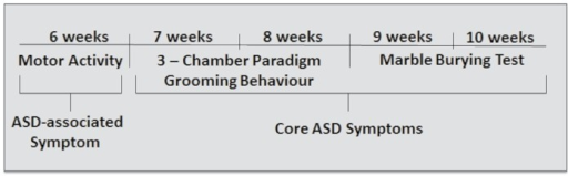 Timeline for behavioral testing.The age of the mice in weeks is indicated.